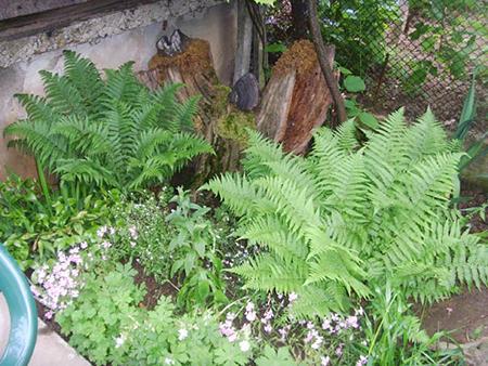 Албена Стоянова малка красива градина