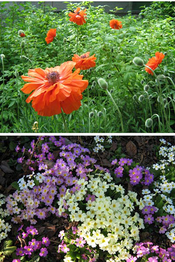 Моите цветя - Росица Клинкова