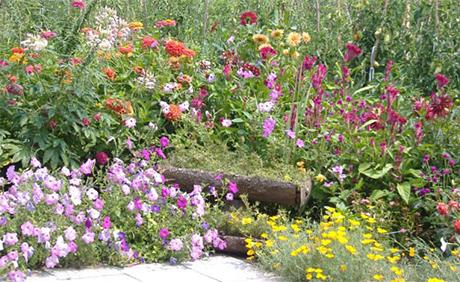 Цветята на баба Елена Донева