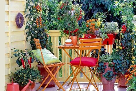 Цветя за балкона и терасата