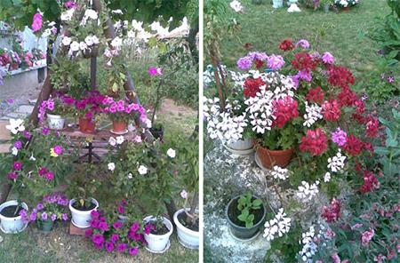 Цветята на баба