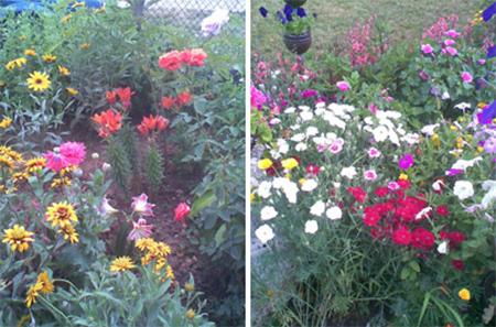 Тюркян красива градина