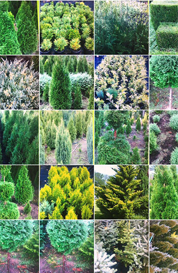декоративни храсти и цветя