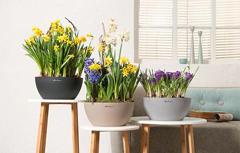 Висококачествени съдове за цветя - Lechuza