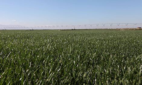 Turkcim производство тревен чим
