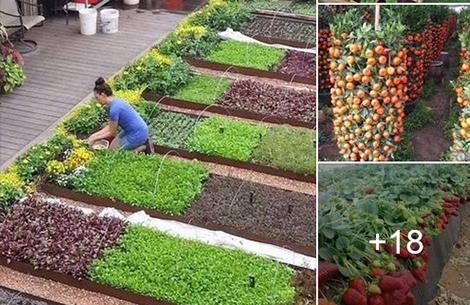 Зеленчукови разсади Петрич