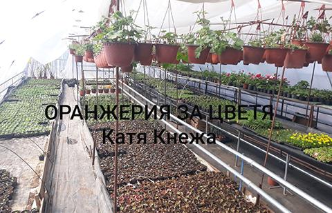 Оранжерия цветя Кнежа