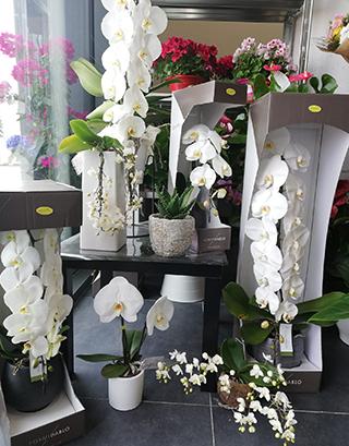 Магазин за цветя Четири Сезона